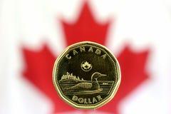 Loonie canadiense Foto de archivo libre de regalías