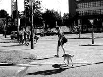 Loop de hond in de stad Stock Foto's