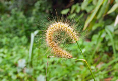 Loop from the flower of grass in the jungle Stock Photos