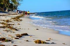 Loop het strand Stock Afbeeldingen