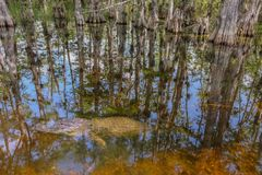 Loop Road Cypress National Preserve stock images