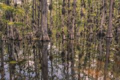 Loop Road Cypress National Preserve stock image