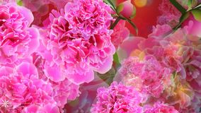 Loopable background with pink flowers of paeonia and green leaves and glitters. Flowers coming from behind the screen, computer generated loopable motion