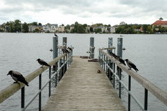 Loopbrug en vogels royalty-vrije stock afbeelding