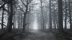 Looped animation of flying through a scary forest
