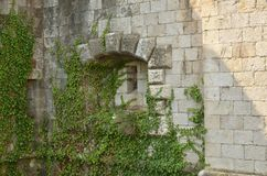 Loophole of a castle. Loophole of an old fortress overgrown with green plants stock photography