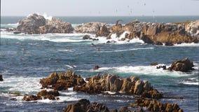 Flock of seagulls and rocky coast loop stock footage