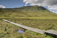 Loopplank op moerassige grond Stock Foto's