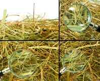 Loops and needles in the hay closeup Royalty Free Stock Photography
