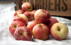 Loose apples Stock Photography