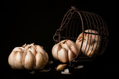 Loose garlic. From metal mesh against dark background royalty free stock image