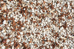 Loose gravel texture with natural seeds and leaves Stock Images