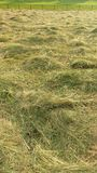 Loose hay in field Royalty Free Stock Photos