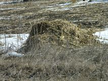 Loose Hay Pile Royalty Free Stock Photography