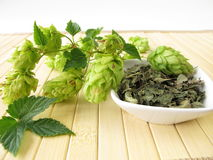 Loose tea with hops Royalty Free Stock Image