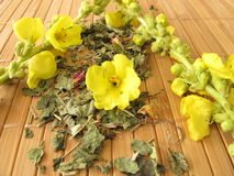 Loose tea with mullein Royalty Free Stock Photo