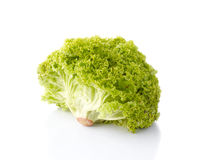 Loosehead lettuce Royalty Free Stock Images