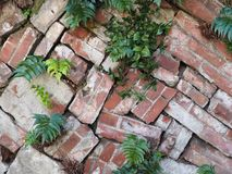 Loosely stacked garden brick wall background photograph. Garden brick wall of loosely stacked bricks, with beautiful green plants growing through the cracks Stock Images