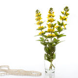 Loosestrife. In a clear vase on a white background Royalty Free Stock Image