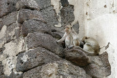 Lop Buri and monkeys Royalty Free Stock Image