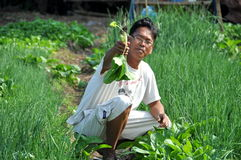 Lop Buri, Thailand: Farmer in Field Stock Images