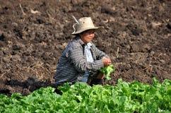 Lop Buri, Thailand: Woman Farmer Stock Image