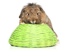 Lop-eared fluffy rabbit on basket Royalty Free Stock Photos