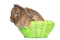 Lop-eared rabbit in basket on a white background Stock Images
