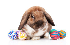 Lop-eared rabbit with eggs Stock Photography