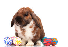 Lop-eared rabbit with eggs Royalty Free Stock Photography