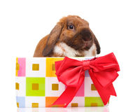 Lop-eared rabbit in a gift box with red bow Royalty Free Stock Photos