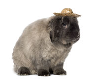 Lop rabbit wearing a hat, isolated Royalty Free Stock Photography