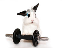 Lop Rabbit and a Weight Stock Images