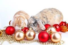 Lop wpólnie i królik Zwierzęcy przyjaciele Rodzeństwo rywalizaci królika królika zwierzęcia domowego białego lisa rex atłasowy re Obrazy Royalty Free
