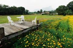 Lopburi, flores de Tailandia fotografía de archivo