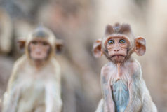 Lopburi Tailândia Fotografia de Stock