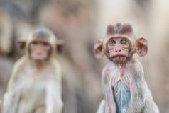 Lopburi Tailandia Fotografia Stock