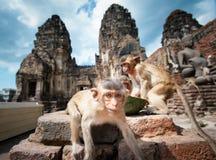 Lopburi Tailandia Fotografia Stock Libera da Diritti