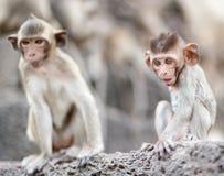 Lopburi Thaïlande photos libres de droits