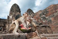 Lopburi Thailand Lizenzfreies Stockfoto