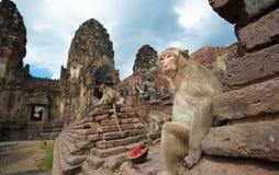 Lopburi Thailand Lizenzfreie Stockfotografie