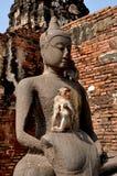 Lopburi, Thailand: Affe bei Wat San Yot Lizenzfreie Stockfotografie