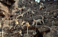 Lopburi, Thailand: Affen bei Wat San Yot Lizenzfreie Stockbilder