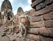 Lopburi Thailand Royalty Free Stock Photos