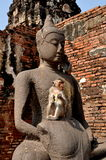 Lopburi, Thailand: Monkey at Wat San Yot Royalty Free Stock Photography