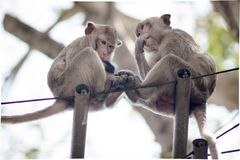 Monkeys family sitting together on black wire stock photos