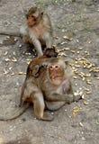 Lopburi, Thailand: Mutter-und Baby-Affen Lizenzfreies Stockfoto
