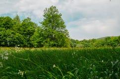 Lopen in de stille aard van de lente is onschatbaar royalty-vrije stock fotografie