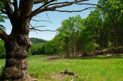 Lopen in de stille aard van de lente is onschatbaar stock foto's
