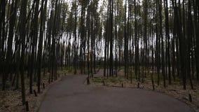Lopend binnen het bamboebos van Arashiyama, Kyoto, Japan stock footage